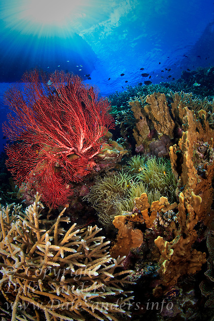 A boat floats overhead above a pristine coral reef in Kimbe Bay off New Britain Island, Papua New Guinea.