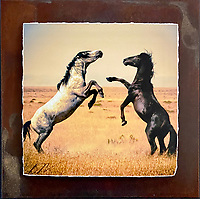 Desert Duel - Mixed Media - Utah<br />
