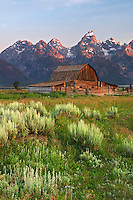 Old barn and sage brush below the Grand Teton in early morning, Grand Teton National Park, Teton County, Wyoming, USA
