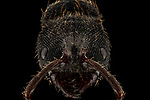 """Pictured: A black ant<br /> <br /> Incredibly detailed close-up photos of insects make them look like creatures straight from a science-fiction film.  The extreme macro photographs make flies, dragonflies, a grasshopper, ants, wasps, a bee and beetles appear lifesize and show them in detail impossible to see with the naked eye.<br /> <br /> The photographs were taken by Lessy Sebastian in Jakarta, Indonesia, who found all the bugs in his garden.  Mr Sebastian, 57, said: """"I was just amazed when I looked back at the photos.  SEE OUR COPY FOR DETAILS.<br /> <br /> Please byline: Lessy Sebastian/Solent News<br /> <br /> © Lessy Sebastian/Solent News & Photo Agency<br /> UK +44 (0) 2380 458800"""