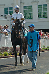 30 May 2009 :  Bold Start with Robbie Albarado in the irons before the 21st running of the G3 Aristides at Churchill Downs in Louisville, Kentucky.