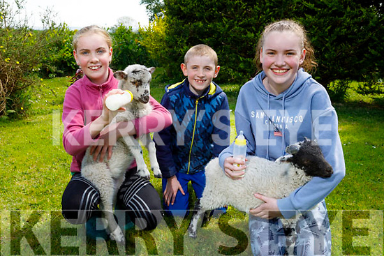 Myra, Paddy and Sarah O'Connor from Ballymac bottle feeding their lambs at home on Monday.