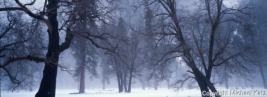 Winter Oaks in Fog, Yosemite, El Capitan Meadow