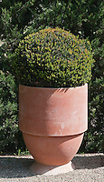 A terracotta pot designed along simple contemporary lines by Paul Gervais is one of the features in the garden