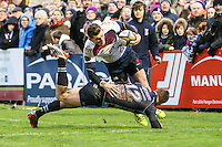Bedford Blues v London Scottish - 01/01/2016