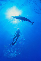 700-21839.© Dale Sanders.Spotted Dolphin/Female Diver.Little Bahama Banks, Bahamas