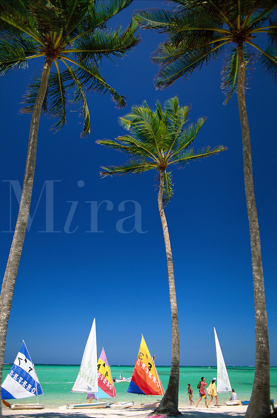 Dominican Republic, Punta Cana, Bavaro Beach, scene of plam trees, sailboats and Caribbean Sea