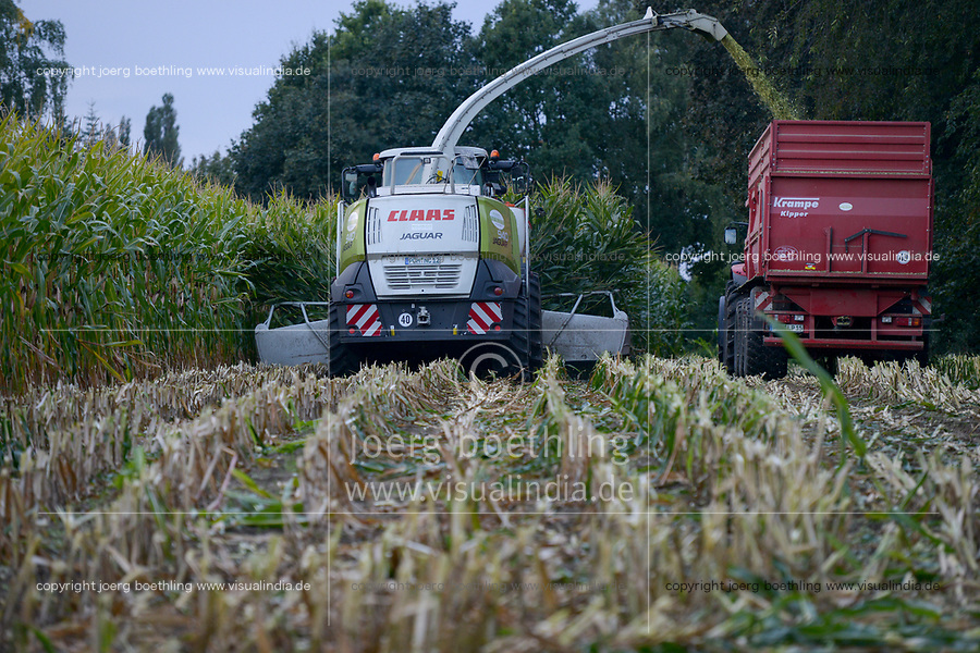Germany, maize harvest with Claas Jaguar, the maize is used for biogas plants or animal fodder