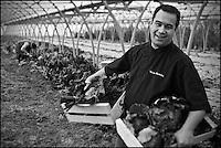 Europe/France/Bretagne/56/Morbihan/Baden:   Thierry Séchelles, restaurant: Le Roscanvec à Vannes  chez  Betty Maheo - Agricultrice  bio - Les Bio de Baden Ferme Biologique