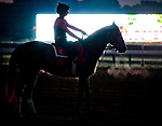 SARATOGA SPRINGS, NY - AUGUST 25: Horses workout on the on the main track at sunrise on Travers Stakes Day at Saratoga Race Course on August 25, 2018 in Saratoga Springs, New York. (Photo by Scott Serio/Eclipse Sportswire/Getty Images)