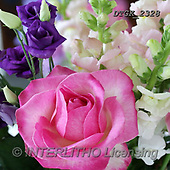 Gisela, FLOWERS, BLUMEN, FLORES, photos+++++,DTGK2328,#F#, EVERYDAY