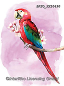 Alfredo, REALISTIC ANIMALS, REALISTISCHE TIERE, ANIMALES REALISTICOS, paintings+++++,BRTOXX10490,#a#, EVERYDAY ,parrot,parrots