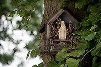 roadside mini chapel in a tree next to the Maastrichterallee cobbled section<br /> <br /> Limburg cycling hotspots<br /> Cycling In Flanders <br /> Flanders Tourist Board<br /> <br /> ©kramon