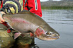 A nice rainbow trout from Tres Valles, Argentina.