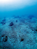 A patch of sea floor with what appears to be dead corals. Corals are highly sensitive to environmental changes. The North coast of Bali has faced  destructive fishing methods as well as increased water temperatures. Scientists predict that more than haft the world's coral reefs may be gone by the year 2030 due to global warming and other threats.