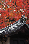 Closeup of traditional Japanese clay roof tile, Kawara, eaves, ornament detail in colorful autumn scenery at Daigo-ji temple, Daigoji complex in Kyoto, Japan Image © MaximImages, License at https://www.maximimages.com