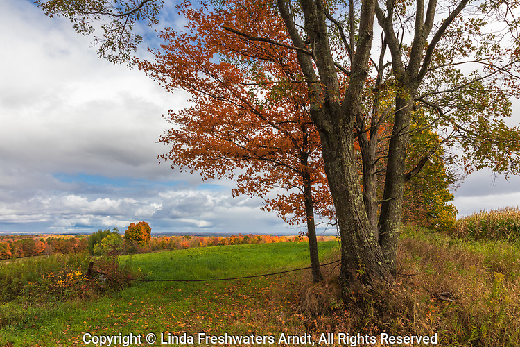 A beautiful autumn view in northern Wisconsin.
