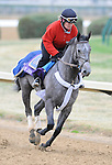 3 November 2010:  My Jen, trained by Eddie Kenneally and to be ridden by jockey John Velazquez, works out for the 2010 Breeders Cup at Churchill Downs in Louisville, Kentucky.(Scott Serio/Eclipse Sportswire)