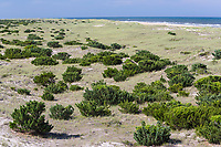 Avon, Outer Banks, North Carolina. Vegetation Helps Stabilize a Barrier Island.  Atlantic Ocean in the Distance. White signs mark bird nesting areas.