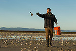 Snowy Plover (Charadrius nivosus) biologist, Ben Pearl, spreading oystershells in salt pond, which snowy plovers can use for camouflage, Eden Landing Ecological Reserve, Union City, Bay Area, California