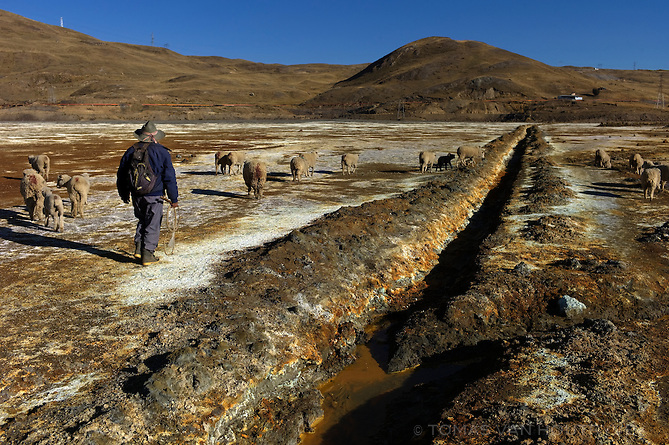 Martin Trinidad Saco, 70, guides his sheep through the highly contaminated Quiulacocha lagoon near Cerro de Pasco, Peru. The lagoon contains acid water and unhealthy tailings from decades of mining and ore processing activity in Cerro de Pasco. Trinidad Saco has lived in the area since 1958, before the lagoon was contaminated. He remembers fishing and collecting bird eggs in the lagoon when it still supported animal life.