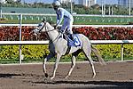07 February 2010:  Star of Sapphire with jockey Rajiv Maragh in the Seventh race at Gulfstream Park in Hallandale Beach, FL.