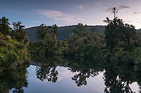 Kahikatea trees reflecting in Lake Moeraki in twilight, South Westland, West Coast, New Zealand