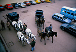 Royal Mews Buckingham Palace, carriage driving horse about to go out on exercise and training in Rotten Row Hyde Park London 1990s 1991.