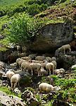 CHE, Schweiz, Kanton Bern, Berner Oberland, Schafe suchen Abkuehlung im Schatten der Felsen | CHE, Switzerland, Bern Canton, Bernese Oberland, sheep looking for cooling in shadows