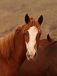 A DOMESTIC HORSE IN BEAVERHEAD MONTANA