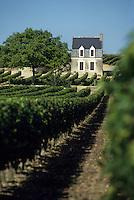 Europe/France/Centre/Indre-et-Loire/Vallée de la Loire/Chinon : Le vignoble - AOC Chinon