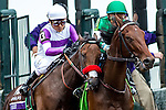 October 31, 2015 :  Nyquist, ridden by  Mario Gutierrez, leaves the starting gate during the Sentient Jet Breeders' Cup Juvenile (Grade I) in Lexington, Kentucky on October 31, 2015. Zoe Metz/ESW/CSM