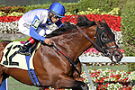 Smooth Daddy (KY) with Luis Saez on board breaks his maiden at Gulfstream Park. Hallandale Beach, Florida 02-22-2014
