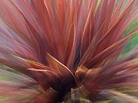 Red flax in Portland, Oregon