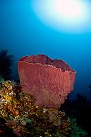 Giant barrel sponge, Xestospongia muta, and sunburst, St. Lucia, Caribbean, Atlantic