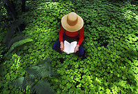 Woman reading in quiet forest in western Washington, sitting alone on ground cover of Oxalis. Washington.
