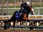 OCT 28: Breeders' Cup Mile entrant Snapper Sinclair, trained by Steven M. Asmussen,  works at Santa Anita Park in Arcadia, California on Oct 28, 2019. Evers/Eclipse Sportswire/Breeders' Cup