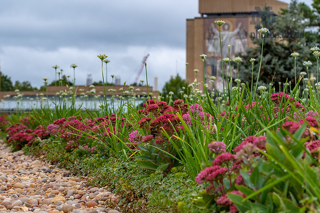 September 6, 2018; Joyce Center green roof (Photo by Matt Cashore/University of Notre Dame)