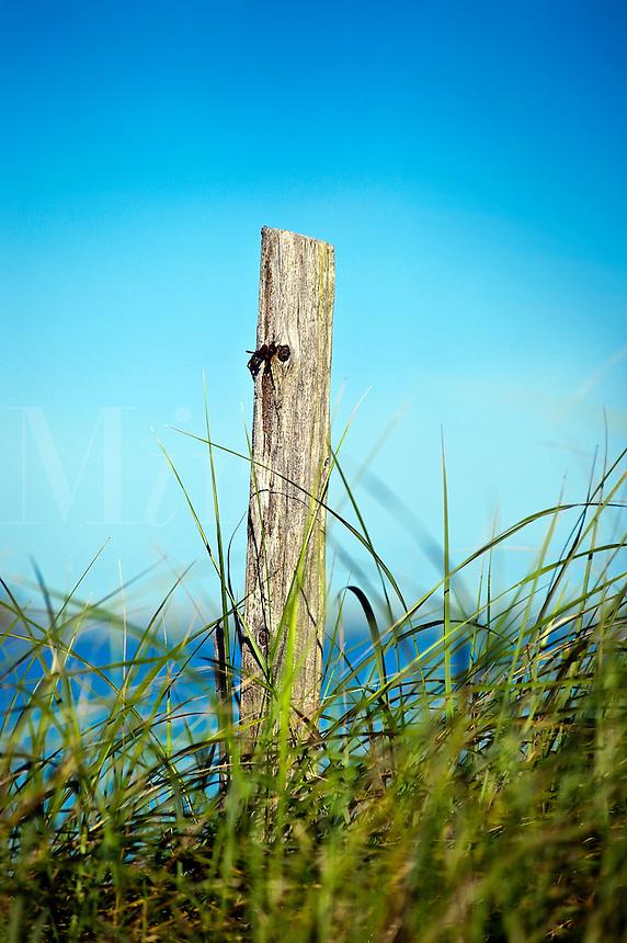 Weathered post in beach dune grass, Cape Cod, MA