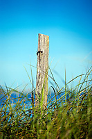 Weathered post in beach dune grass, Cape Cod, MA