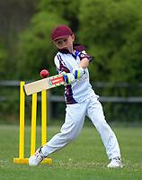 171125 Wellington Junior Cricket - Karori Keas v Easts Moreporks