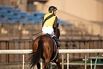 FUCHU,JAPAN-FEB 21: No spectator on  February Stakes at Tokyo Racecourse on February 21,2021 in Fuchu,Tokyo,Japan. Kaz Ishida/Eclipse Sportswire/CSM