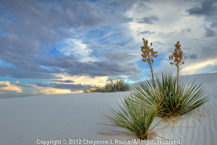 Twin Yuccas - White Sands National Monument - New Mexico