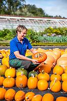 BNPS.co.uk (01202 558833)<br /> Pic: MaxWillcock/BNPS<br /> <br /> Pumpkin Harvest.<br /> <br /> Pictured: Gardener Clem Ransford inspecting a colourful Turk's Turban squash.<br /> <br /> An autumn harvest of squashes and pumpkins has been laid out in a spiral for visitors at Forde Abbey House & Gardens in Dorset.<br /> <br /> Forde Abbey is a former Cistercian monastery dating back to the early 12th century.