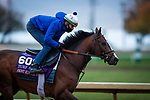 October 30, 2020: Front Run The Fed, trained by trainer Chad C. Brown, exercises in preparation for the Breeders' Cup Turf Sprint at Keeneland Racetrack in Lexington, Kentucky on October 30, 2020. Alex Evers/Eclipse Sportswire/Breeders Cup