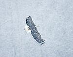 """Flying in Winter Weather"", Alaska"