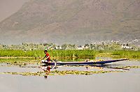 Man paddling traditional shikara, full of fresh cut flowers, Dal Lake, Srinagar, Kashmir, India.
