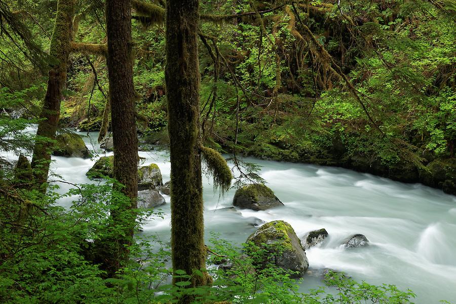 The Boulder River running through old-growth forest, Boulder River Wilderness, Mount Baker-Snoqualmie National Forest, Washington, USA