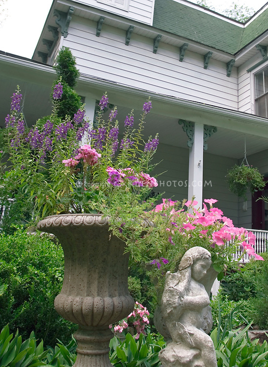 Angelonia, annual geraniums (Pelargonium) and Petunias in concrete urn container with cherub and house