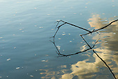 Pará State, Brazil. Xingu River. Reflection of clouds and twigs.